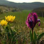 Tavaszi kilátás CsiporEnikő